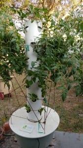 Tower Garden Fruits & Vegetables