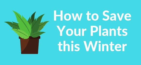 How To Save Your Plants This Winter